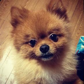 [み]TVチャンピオン優勝者の犬のしつけ講座のDVDを買って、犬の吠えグセを治したい
