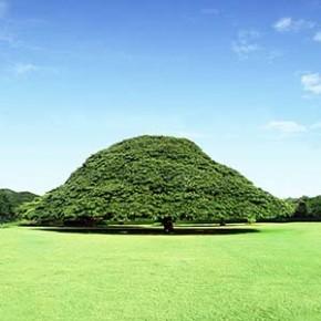 [み]記念植樹にぴったりな木の種類